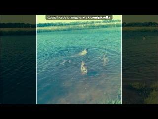�Summer 2014� ��� ������ ����� - Ÿ ���. Picrolla
