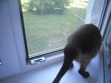 Моя кошка охотится за птицами....=)